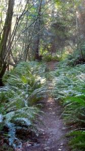 6 - Ferns - trail head